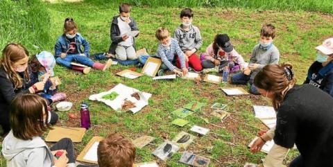 GUINGAMP - La vie des insectes n'a plus de secret pour ces élèves